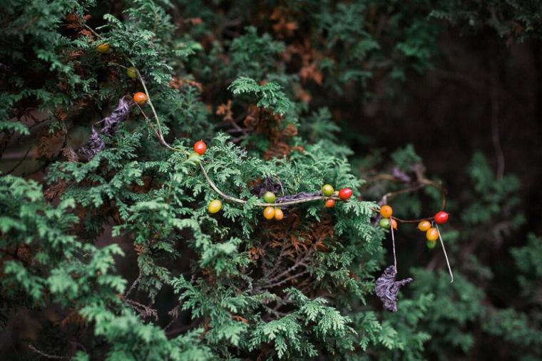 westonbirt-arboretum-proposal-engagement-photographer-annie-crossman-103
