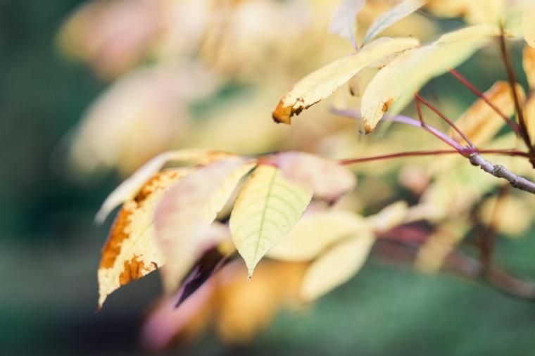westonbirt-arboretum-proposal-engagement-photographer-annie-crossman-4