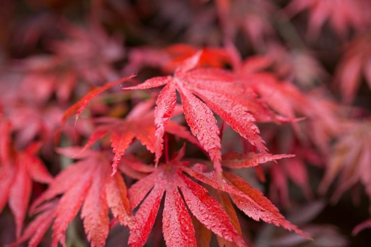 westonbirt-arboretum-proposal-engagement-photographer-annie-crossman-75
